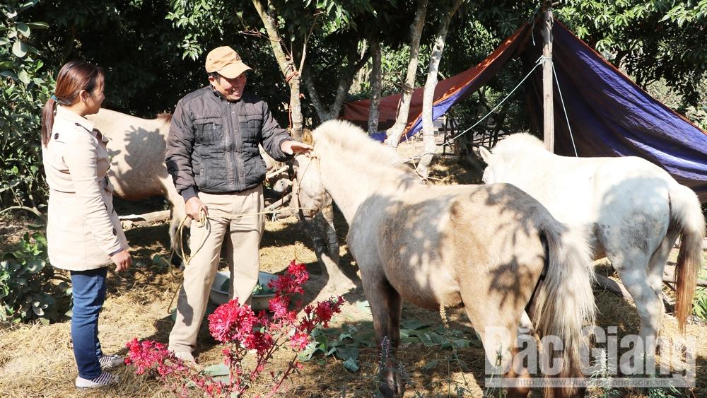 Khai thác lợi thế chăn nuôi đại gia súc